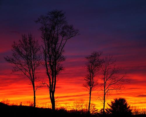 sunset red sky orange cloud tree silhouette yellow landscape topf50 purple topv1111 500v50f topi hooflander