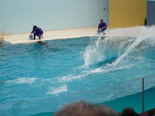 Dolphin splahs