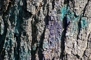 marked tree I   by dotpolka