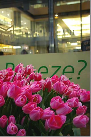 tulip farm at marunouchi02 photo by *istD