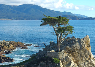 Lone Cypress | by bdinphoenix