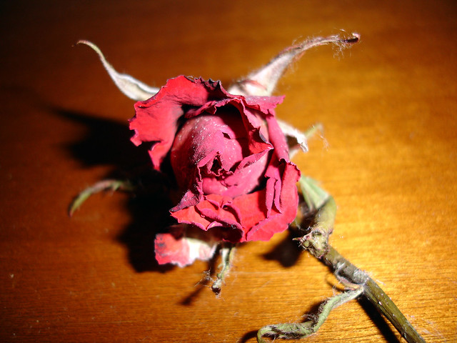 A Rose from the Hell
