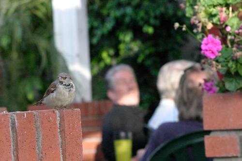 Bird #4