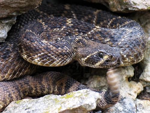 macro nature wildlife snakes forthood fthood clintking