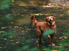 Alex Swimming Hole 9-25-05 | by Andrew Morrell Photography