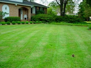 DSC05299-Perfect_Lawn   by Sir Mildred Pierce