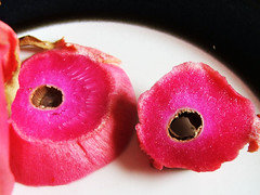dragonfruit ends | by only alice