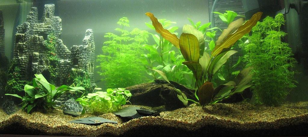aquário vazio