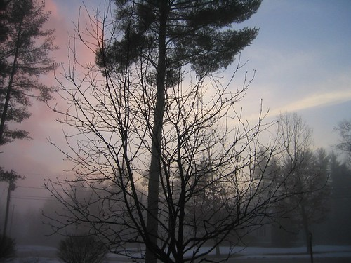 trees sunset sky cloud sun cold tree wet water fog set night clouds bush cloudy dusk over foggy chilly setting bushes chill sets fogged chilled clouded chills bushy foggedover