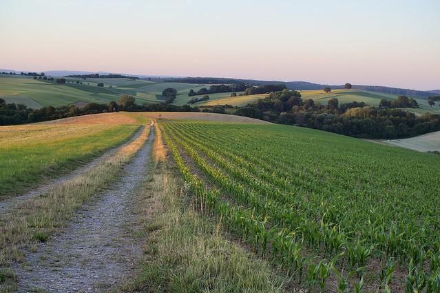 Explored: Fields and Hills of Gold / Goldene Felder und Hügel