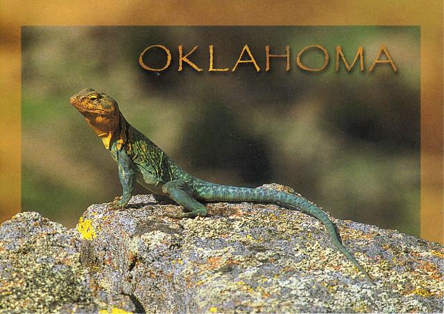 Oklahoma Mt. Boomer Lizard Postcard
