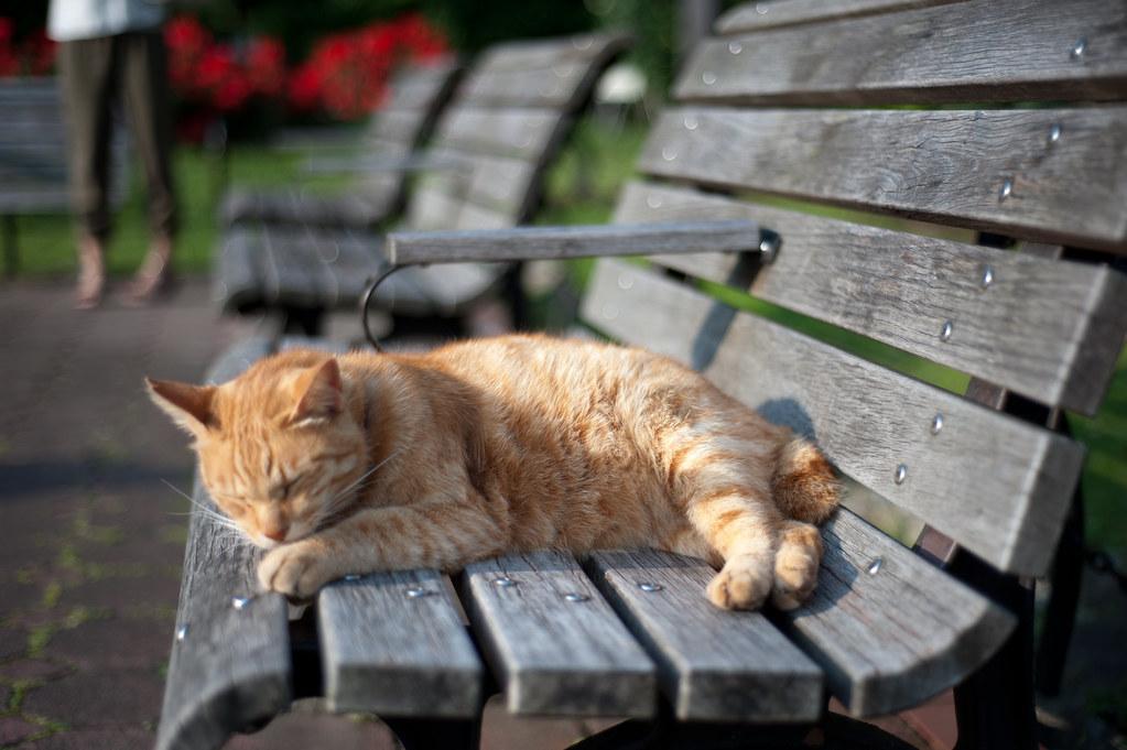 日比谷公園の猫 2011/06/04 DSC_4872