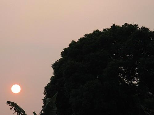 sunset sky panorama orange sun tree