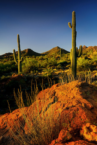 arizona cactus sunrise nikon sonorandesert superstitionmountains 1735mm28 queenvalley focallength35mm d700 tomstoncel