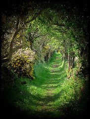 The Old Road   by Cat-Art ~ Doublevision - Images