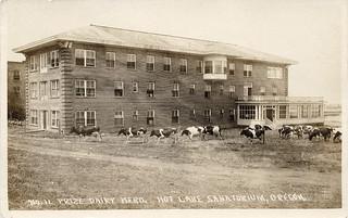 Prize Dairy Herd, Hot Lake Sanatorium, 1922