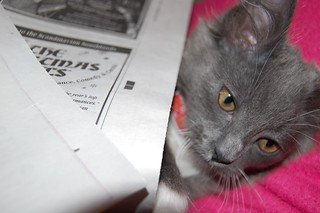 Luna reading the Sunday paper1 | by kristin wolff