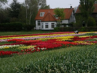 Netherlands | by Vicki Devine