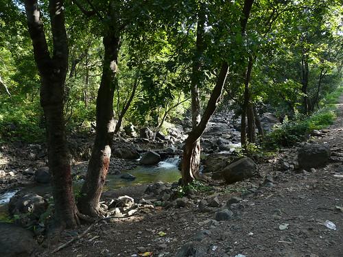 Tungareshwar Wildlife Sanctuary