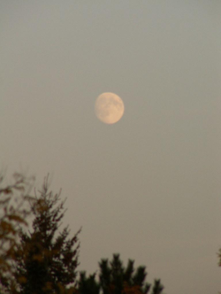 Mond am Baum stehen im nachdrücklichen Widerspruch zu der überdies so still stehen bleibenden Natur und dem unberührten frisch gefallenen Schnee zur Laubfaerbung 240