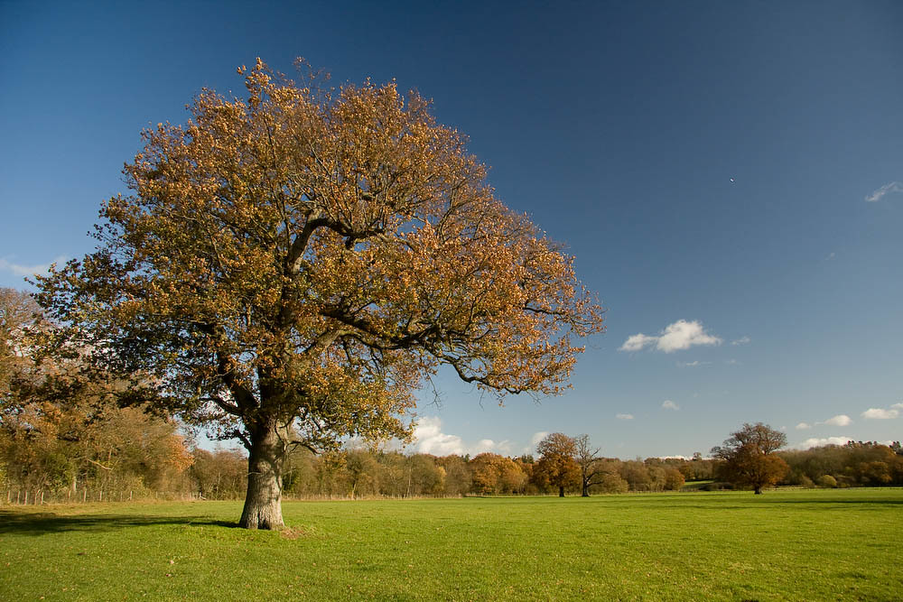 Kent in the Autumn The Eden Valley