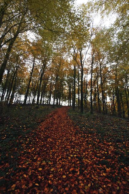 Autumn - Forest - Path