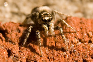 Sigma 17-70mm DC Macro spider | by zoutedrop