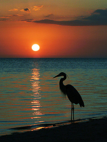 ocean blue light sunset sea sky orange sun reflection bird heron water clouds reflections twilight waves florida crane tropical meditation setting settingsun meditationatsunset