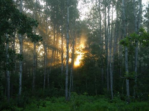morning sunlight minnesota sunrise woods throughthetrees brainerdmn lookingoutmyfrontdoor