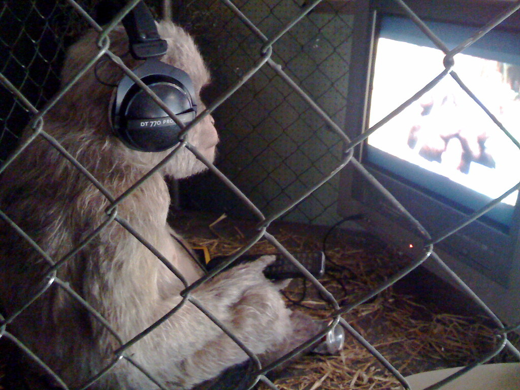 Monkey watching animal porn | The Village Pet Store and