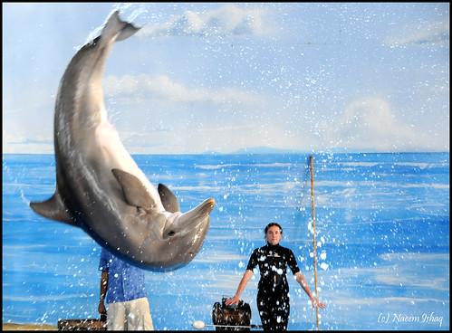ocean blue water animal frozen jump nikon colorful action shots dolphin twirl creature highspeed outstanding d300 outstandingshots platinumphoto aplusphoto diamondclassphotographer flickrdiamond