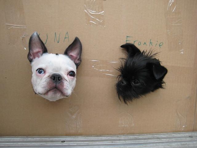 Packaged Una & Frankie