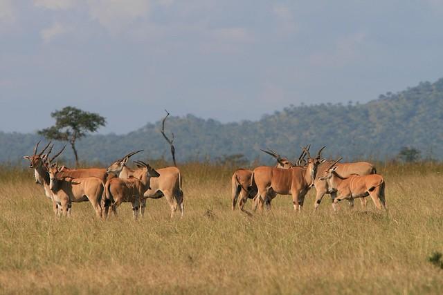Tanzania - Mikumi