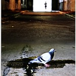 The Pigeon and the Runner