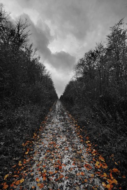 Autumn - Remembering the fallen 11/11