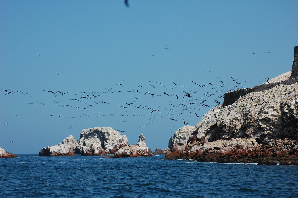 Image result for ballestas islands