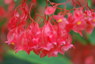brightly red... (for Taty's friend Sharaf)   by tatyveli
