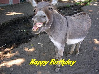 donkey `1 happy birthday | by chambersentertainment