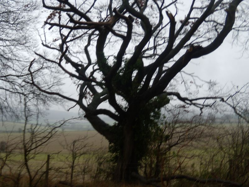 Stark tree Saunderton circular via Bledlow