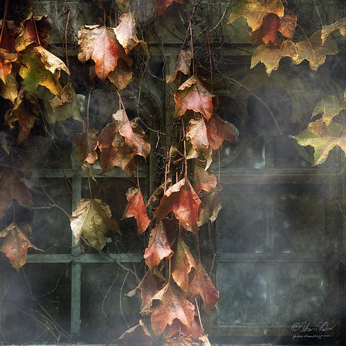 autumn fall leaves sadness passing melancholy infinestyle selectbestexcellence sbfmasterpiece
