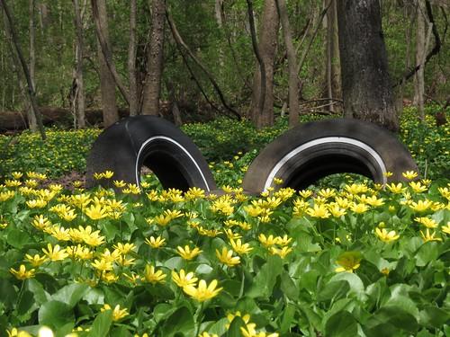 Tire's Blooming   by rebonnett