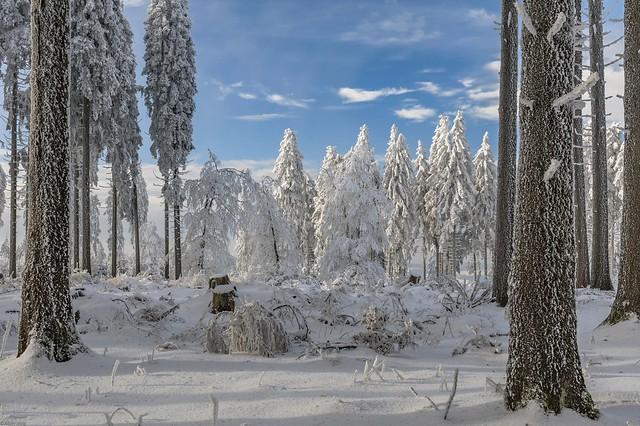 *Winter auf dem Erbeskopf*