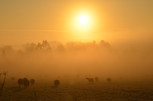 sun sunrise rise early mornng mist fog sheep backlit sillouettes nikon d7000 hawkesbury upton south glos gloucestershire golden light