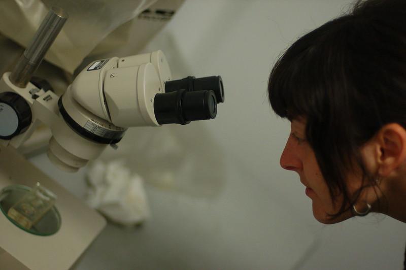 Microscoped