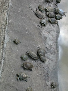 Red-eared sliders | by East Asia & Pacific on the rise - Blog