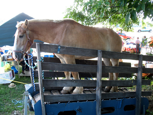 127 Yard Sale (9) - Horse   US 127, August 7, 2008   Flickr