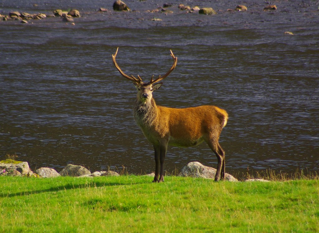 "A real ""Monarch of the Glen"""
