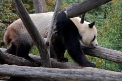 Vienna Zoo | by My Alternative Photos