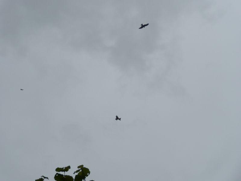 3 kites Goring circular