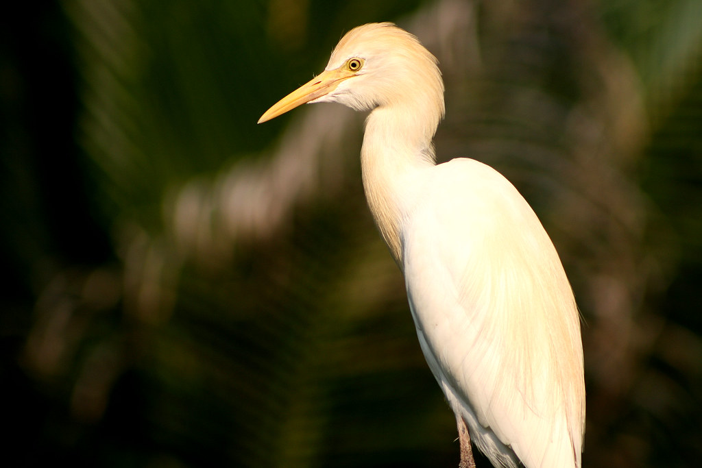 Taman Burung KL